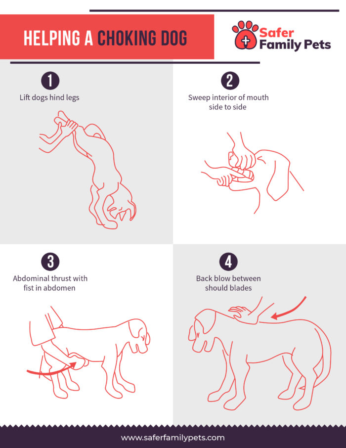 Four illustrated steps to help choking dog