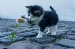 cat playing with flower