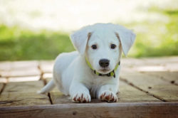 white puppy laying on bricks